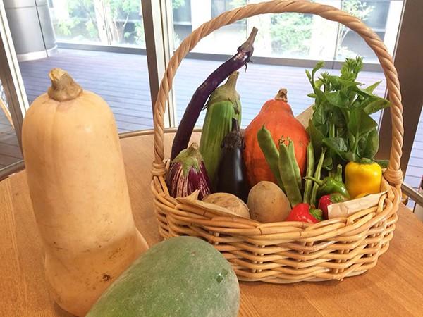 京都の窪田さんから元気なお野菜がたくさん届きました